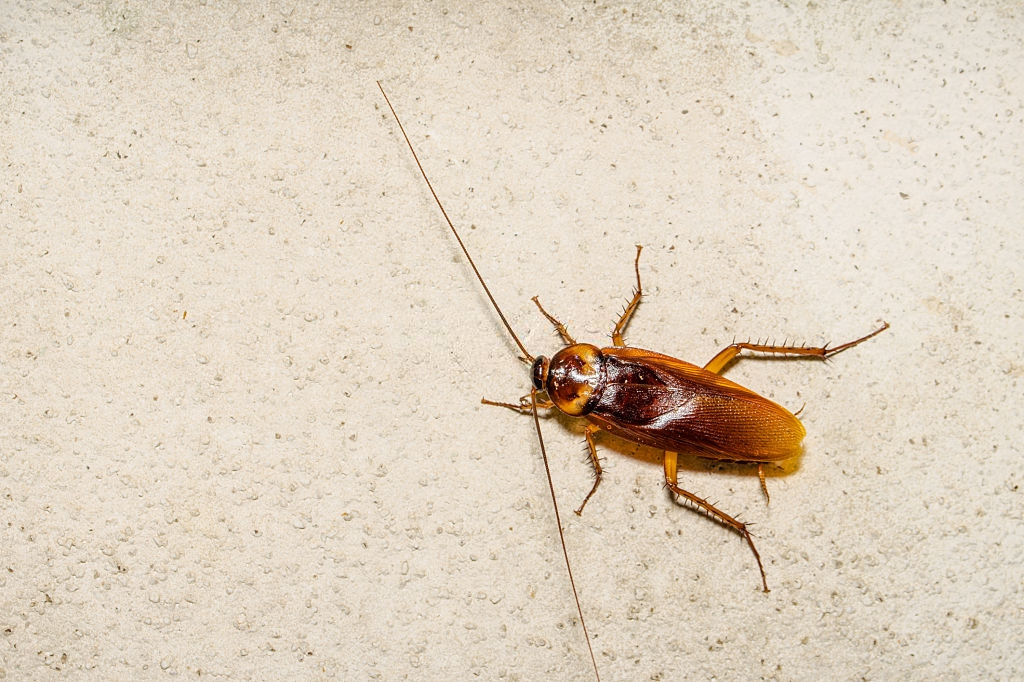 Cockroach Control, Pest Control in Eltham, Mottingham, SE9. Call Now 020 8166 9746