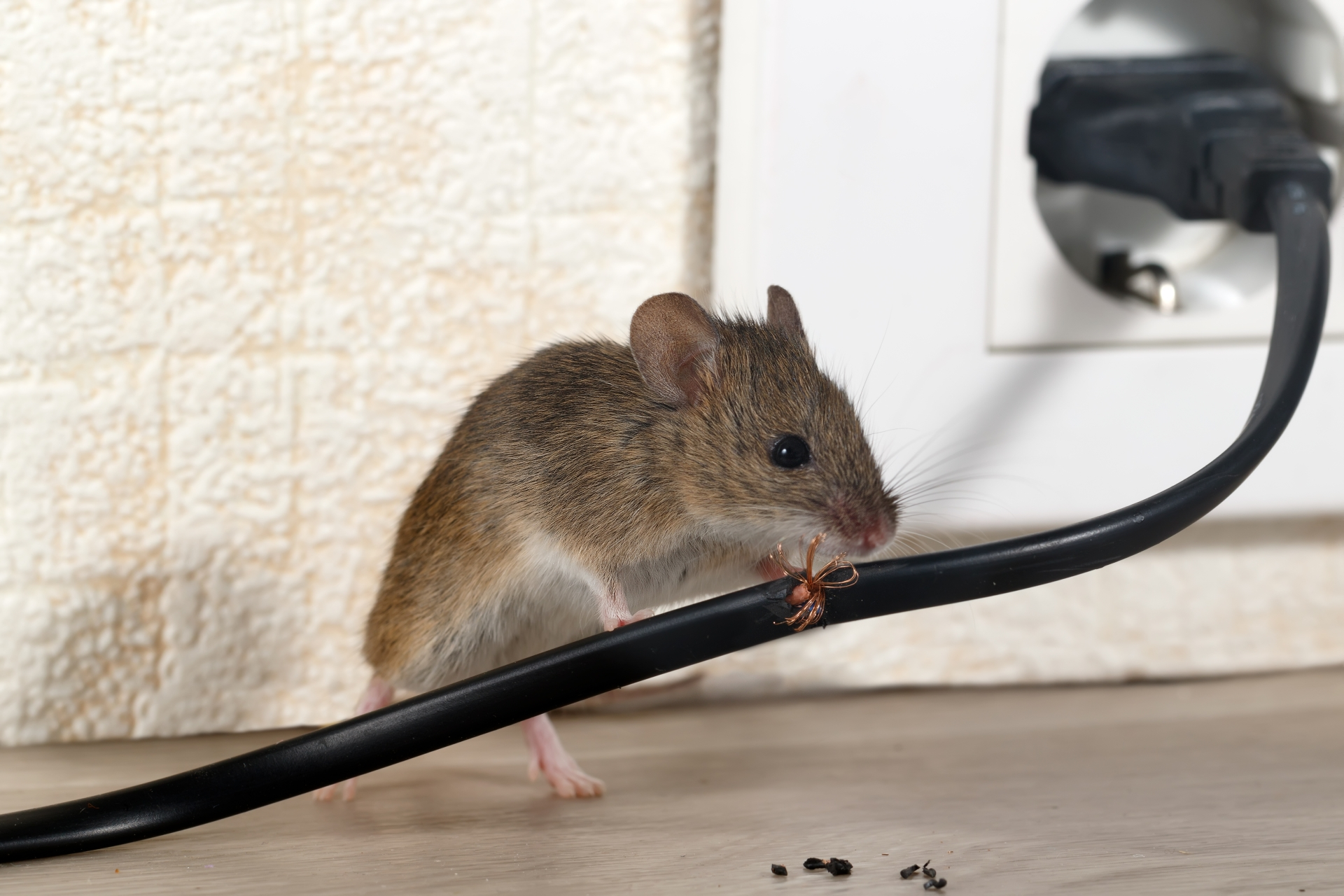Mice Infestation, Pest Control in Eltham, Mottingham, SE9. Call Now 020 8166 9746
